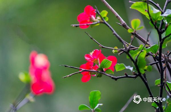 立春到了!重庆的春天气息来了