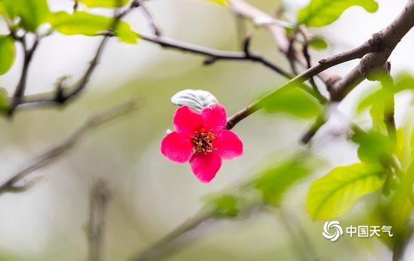 立春到!重庆春日气息扑面而来