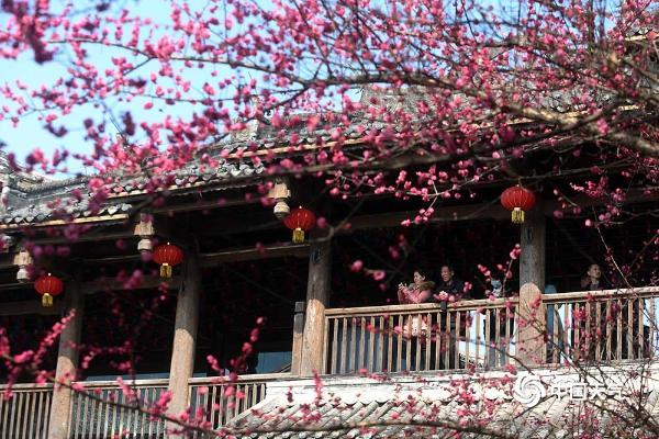 重庆黔江:美丽如画的梅营镇 游客们欣赏梅花 迎接春天