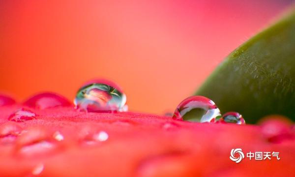 张张都美!重庆雨后花朵娇艳欲滴 朵朵惹人醉