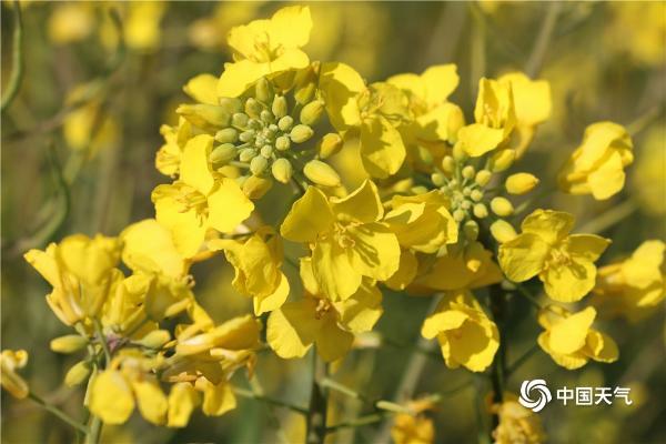 是春天了!它们是金色的。                                         <small date-time=