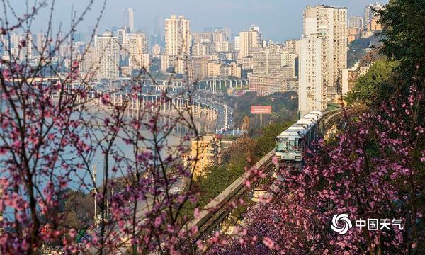 重庆到春天的火车来了!穿越花海 形成美丽的风景
