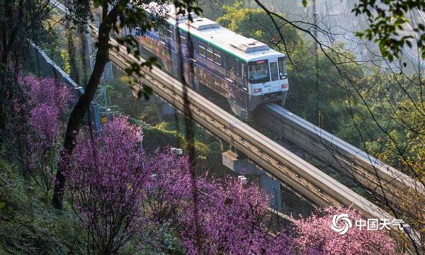 重庆开往春天的列车来了!穿越花海形成靓丽风景线