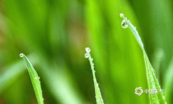 今天的雨 湖南安乡 使土地恢复生机 嫩草在春天发芽