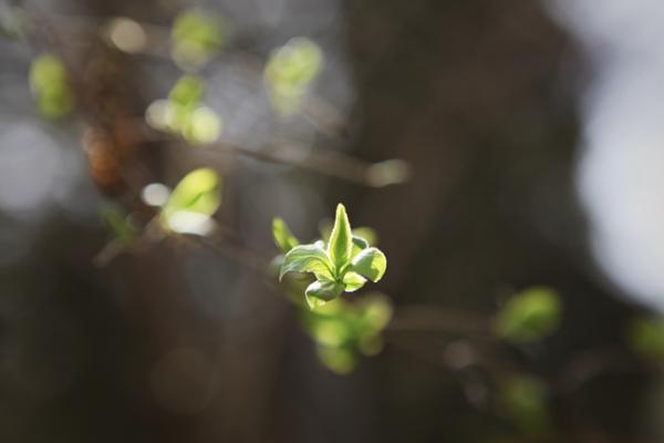 """春来早!全国树叶变绿地图出炉 北方大部绿叶提前""""报到"""""""