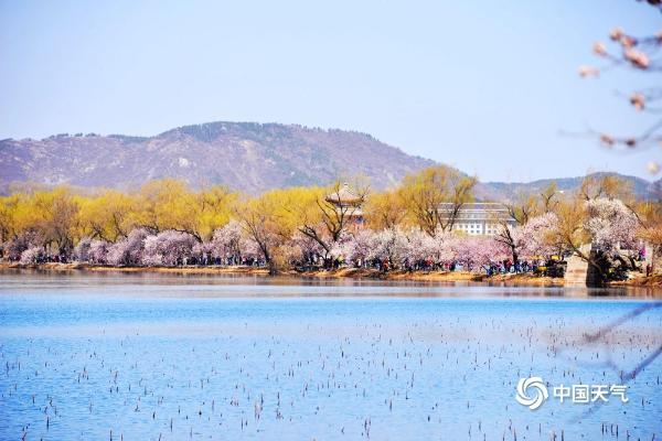 北京颐和园花朵初绽 蓝天暖阳相伴生机盎然