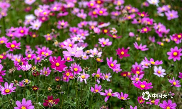 广西贺州花开三月 不负春光