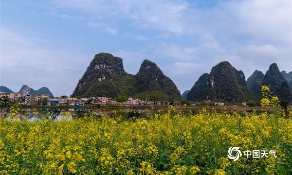 广西贺州三月花开无春