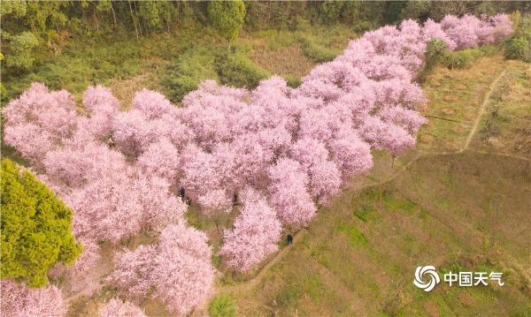四川巴中花朵肆意绽放 春意浓浓