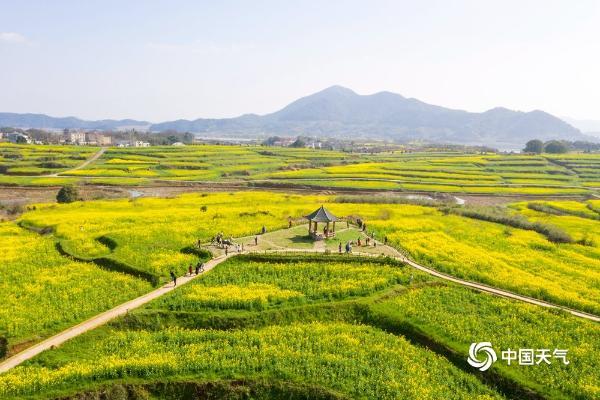 """江西瑞昌油菜花空中摄影 如金色""""地毯"""""""