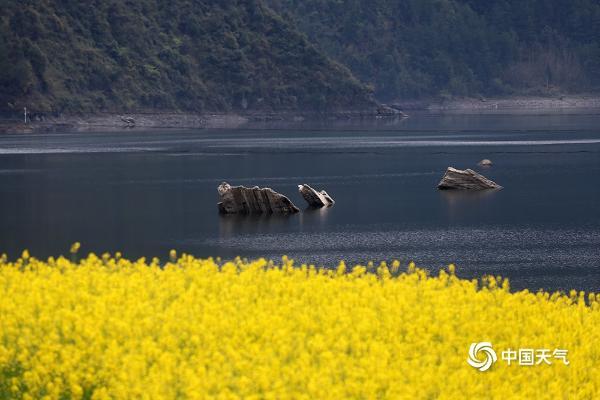 重庆黔江油菜花掩映小南海 湖光山色美如画