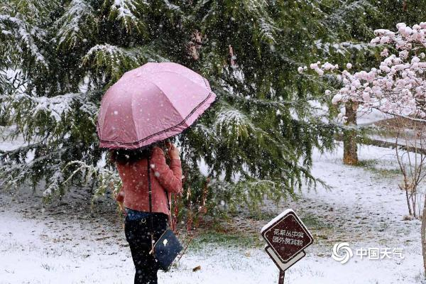 甘肃临夏雨雪驱浮尘 白雪掩映花娇艳