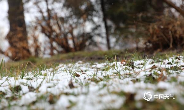 雪!新疆乌鲁木齐下雪了 地上的树都是白色的