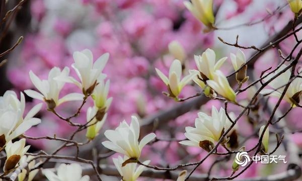 是春天了!北京迈入气象学意义上的春天 植物园的花都开好了