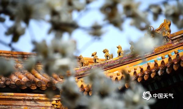 北京故宫花儿争春 红墙砖瓦更显静谧