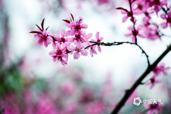 重庆彩云湖湿地公园 花红柳绿惹人醉