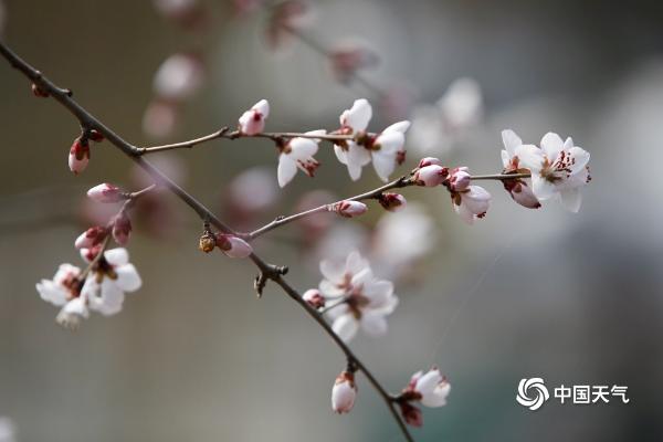 初吐芬芳 北京花朵渐次绽放赏花之旅开启