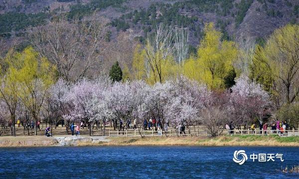 北京植物园繁花似锦 游客们来赏花 寻找春天的气息