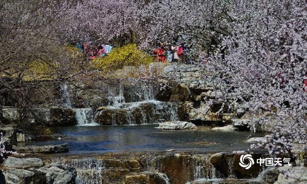 北京植物园百花争艳 游客前来赏花踏青寻觅春的气息