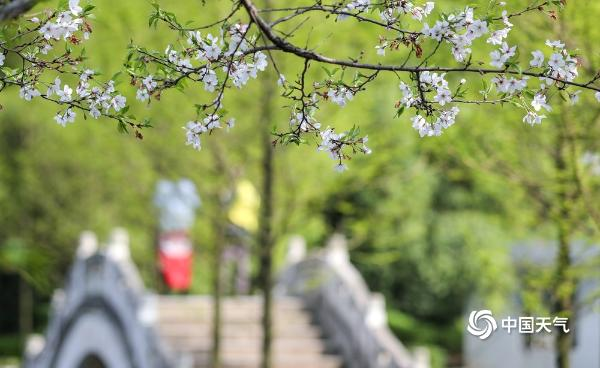 湖南衡阳天朗气清 西湖公园鸟语花香春意浓