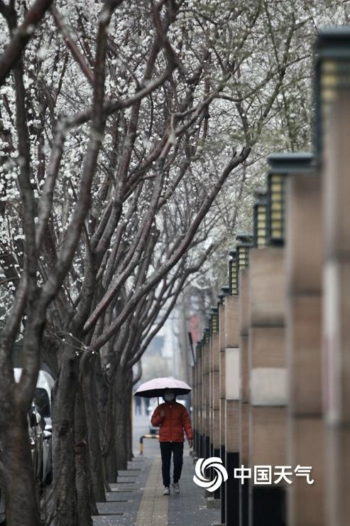 今晨北京小雨淅沥气温下降 市民撑伞出行
