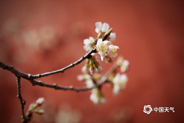 花香与诗意交融 北京 大宅院和所有的爱情都不能关闭