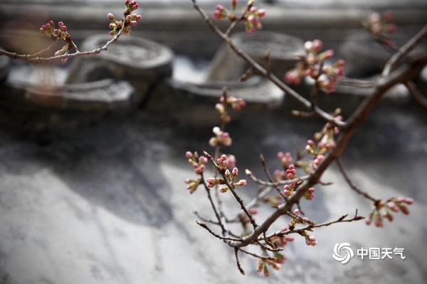 花香与诗意交融 北京大觉寺满园春色关不住