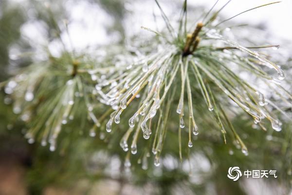 贵州毕节现春日冰凝 银光闪烁