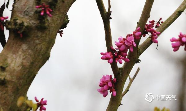 四川广安:一汀烟雨润 姹紫嫣红春意浓