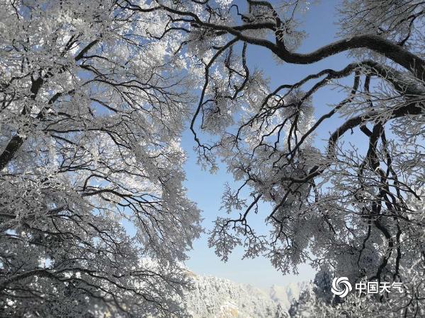 难得一见!陕西华山现雾凇美景 玉树琼枝