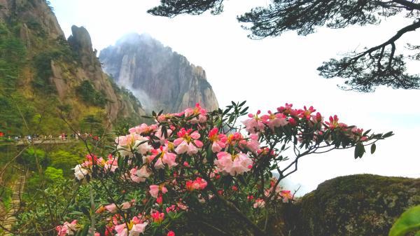 """""""五一""""假期 来安徽黄山旅游春光无限"""