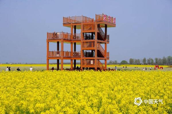 感受春的气息!河南平顶山万亩油菜花竞相绽放