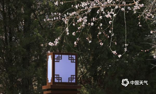 古典美!辽阳泰和园桃花盛开 与古建筑相映成趣
