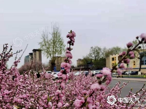 """北京春雨已连续四个星期五""""在线"""""""