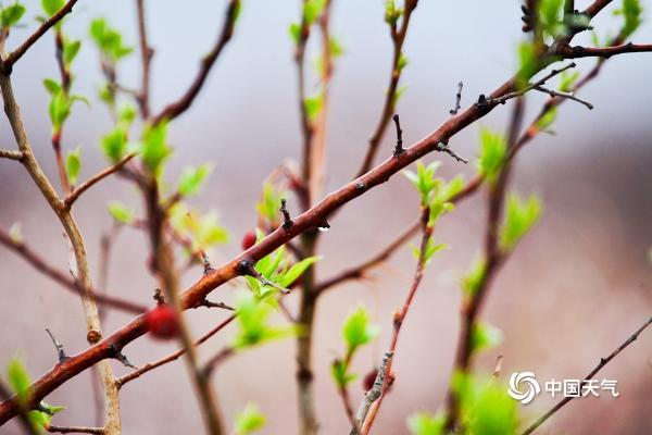 雨润花更娇 北京部分地区迎来春雨