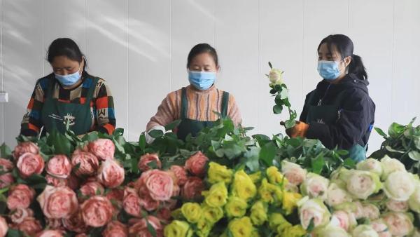河北邱县:花海为媒,打造特色文化旅游品牌