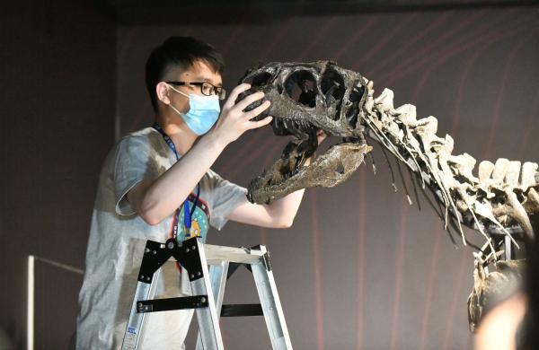 """异特龙骨架化石""""落户""""广州"""
