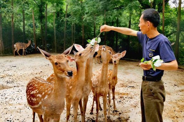 """湖北武汉推出多项活动,""""棕""""有一款如你意!"""