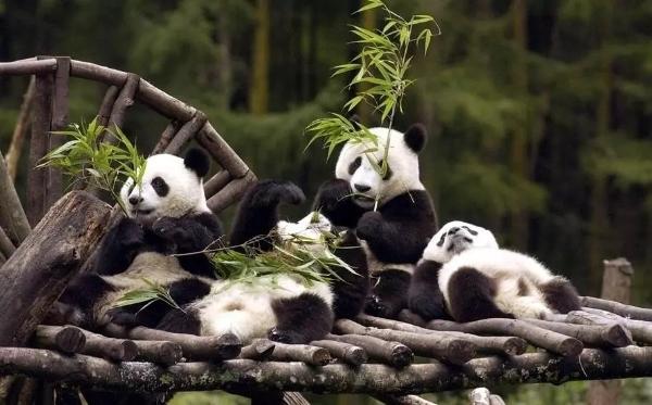 成都成华:高标准全力推进熊猫国际旅游度假区建设