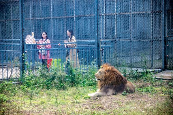 四川宜宾第一个野生动物世界,藏着多少精彩?