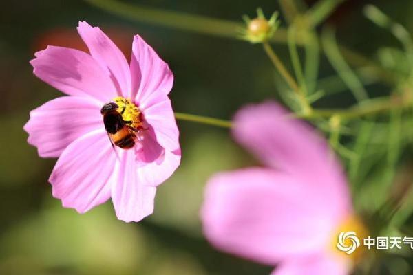 蝶舞蜂飞告诉你吉林初秋别样美丽