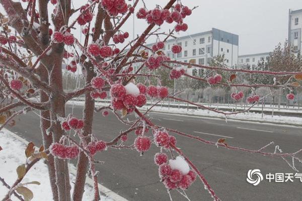 新疆伊犁察布查尔县迎今冬首场大雾  雾凇美如画