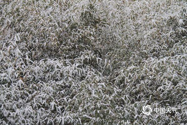山东烟台威海元宵节飘雪