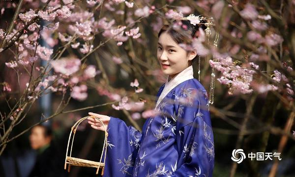 暖阳相伴 重庆南山植物园樱花绽放引游客