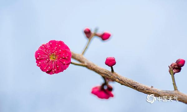 河北石家庄天晴日暖 春芽萌动春意浓