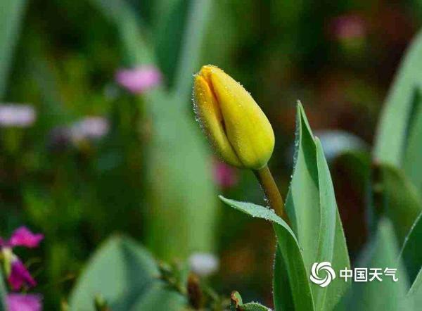 湖南衡阳:晨露润花 花争艳