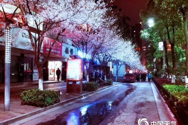 """湖南永州""""夜樱""""绚烂 流光溢彩"""