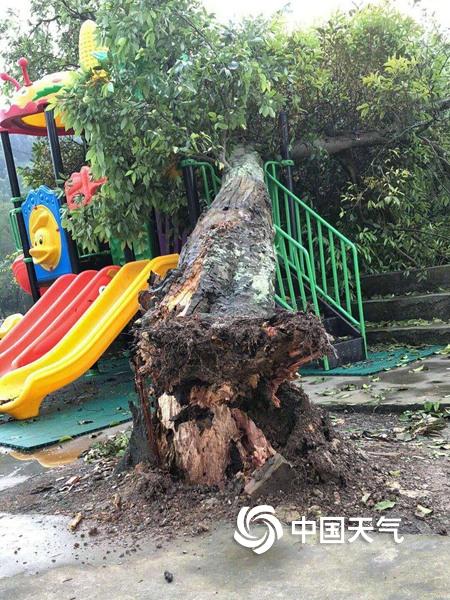广西忻城象州多地遇大风冰雹 屋顶车窗被砸破