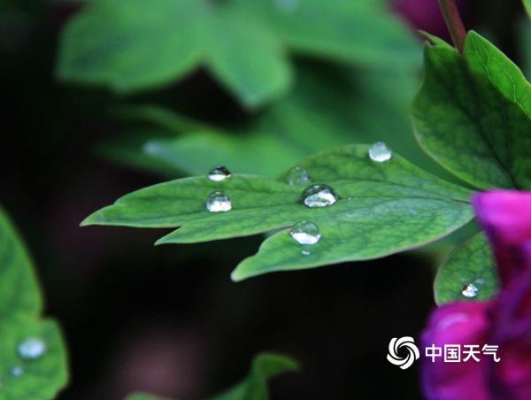 雨润西安 花朵娇艳欲滴