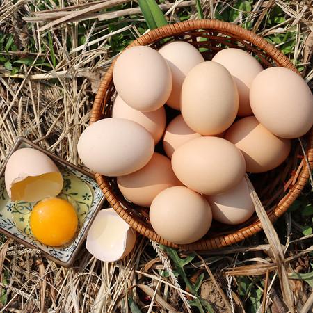"""每天吃多少个鸡蛋最好?邮乐网告诉你7个""""不要"""""""